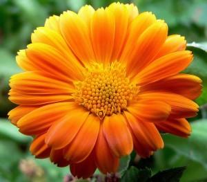 flower-3_640