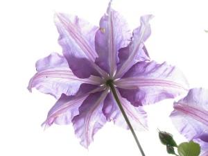 flower1_640
